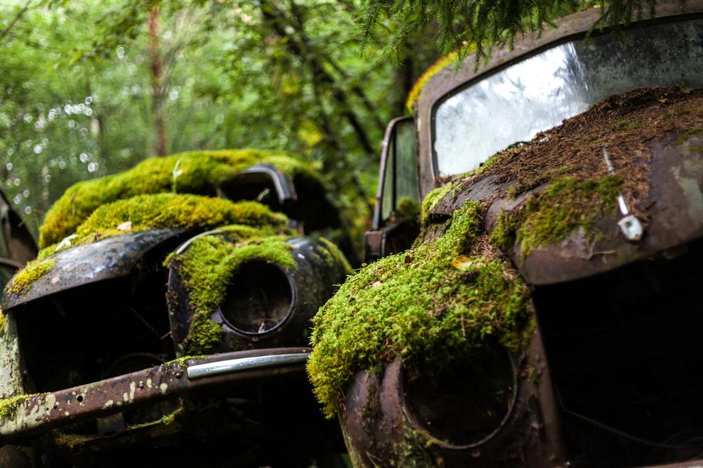 carros abandonados 10 Uma sucata abandonada na Suécia